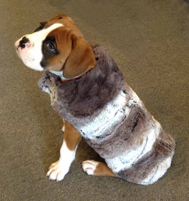 Faux Fur Dog Coat in Birch and Grey